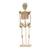 "DIY Wooden 8"" Skeleton Model 3D DIY Jigsaw Puzzle"